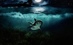 Picture Water, Night, Look, The moon, Dolphin, Art, Underwater world, Algae