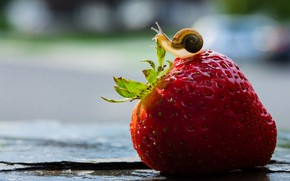 Picture macro, background, snail, strawberry, berry, bokeh