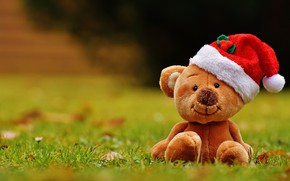 Picture grass, red, nature, background, glade, toy, bear, bear, New year, bear, plush, Teddy, cap, soft, …