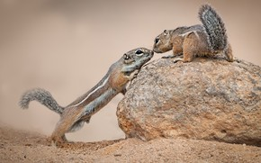 Picture look, pose, stone, Chipmunk, a couple, Duo, two, stand, chipmunks, familiarity