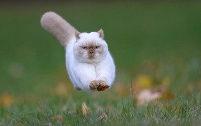 Picture jump, fallen leaves, fluffy cat
