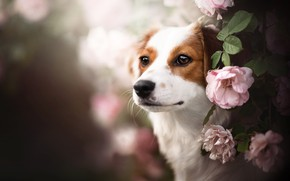 Picture look, face, flowers, dog, bokeh