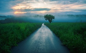 Picture Tree, Road, Fog, Morning