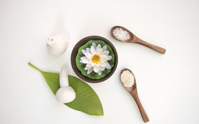 Picture flowers, spoon, bags, Spa