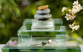 Picture leaves, flowers, pebbles, stones, relax, calm, rose, spring, transparent, plastic, flowering, stand, peace