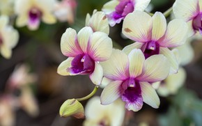 Picture flowers, branch, orchids, OldMan Stocker