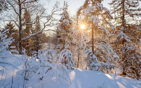 Picture winter, forest, the sun, sunset, the snow, Sunny, the snow, Saint Petersburg, winter forest, Sunny ...