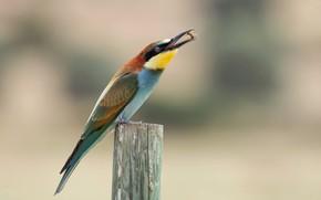 Picture background, bird, stump, Shura