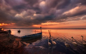 Picture the sky, the sun, clouds, light, sunset, birds, clouds, network, river, mood, pink, shore, boat, …