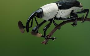 Picture macro, beetle, insect, трубконосик