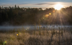 Picture autumn, forest, the sun, light, fog, river, shore, reed, cattail