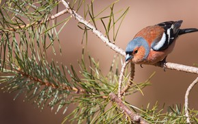 Picture nature, bird, branch