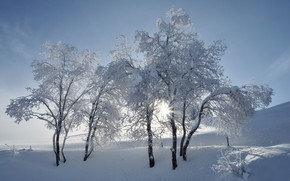 Picture winter, trees, trio