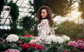 Picture look, girl, flowers, pose, dress, hydrangea, greenhouse, Sergey Olszewski, Alisa Musina