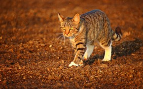 Picture cat, striped, is, blurred background