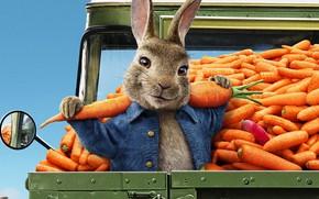 Picture cartoon, carrot, rabbit, 2020, Peter Rabbit, Peter Rabbit, Peter Rabbit 2, Peter Rabbit 2