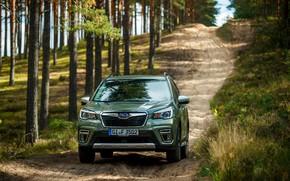 Picture the descent, Subaru, crossover, Forester, 2019