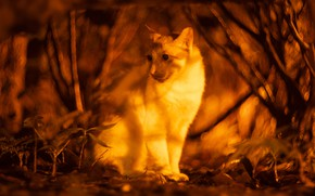 Picture forest, cat, white, cat, look, face, light, trees, night, branches, nature, Park, background, blur, sitting, …