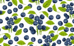 Picture white, berries, background, texture, blueberries