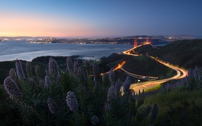 Picture road, summer, the sky, sunset, flowers, bridge, the city, lights, shore, coast, view, Bush, height, …