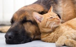 Picture cat, dog, sleep