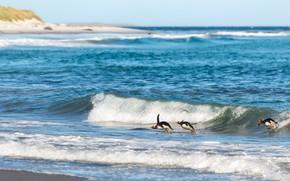 Picture sea, wave, penguins, bathing