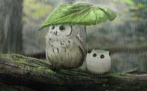 Picture rain, owl, leaf, owlet, hide
