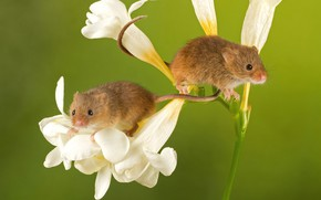 Picture flowers, mouse, crumbs