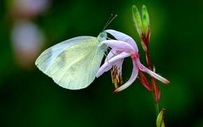 Picture flower, butterfly, bokeh
