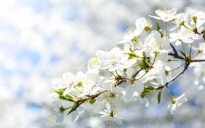 Picture Color, Flower, Plant, Plants, Flower, Flowers, Color, Flora, Plants, Close-up, Blooming, Bloom, Flora, Plant, PhotoMIX, …