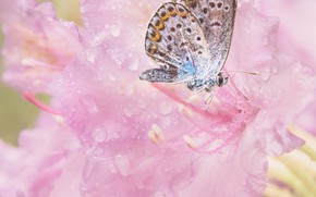 Picture flowers, butterfly, pink