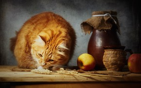 Picture wheat, cat, cat, look, face, light, pose, the dark background, table, apples, food, spikelets, red, …