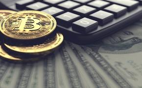 Picture money, dollars, bitcoin, calculator