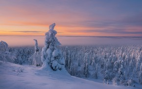 Picture winter, forest, snow, trees, frost, cold, Finland, Lapland