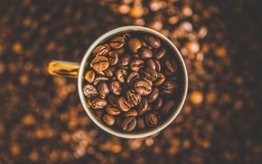 Picture Macro, Grain, Coffee, A bunch, Cup, A lot, Coffee beans, Coffee, Close-up, Grain, Grains, Roasted, ...