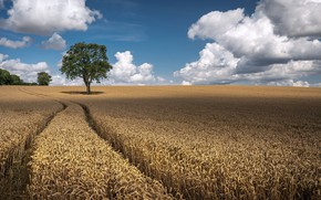 Picture field, summer, the sky