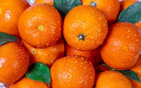Picture leaves, water drops, tangerines