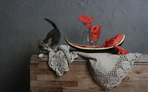 Picture cat, pose, kitty, grey, wall, glass, watermelon, fabric, chest, still life, slices, decanter