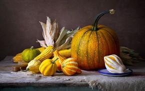 Picture the dark background, table, corn, pumpkin, pumpkin, still life, items, composition, the cob