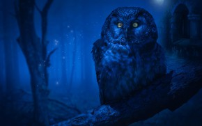Picture forest, look, night, fog, darkness, rendering, castle, tree, owl, bird, the moon, branch, twilight, sequins