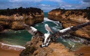 Picture sea, rocks, bird, Pelican