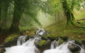 Picture forest, landscape, nature, fog, stream, stones, waterfall
