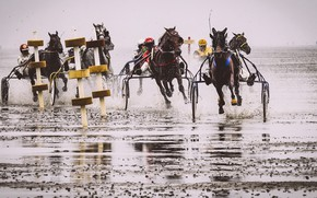 Picture race, horses, running