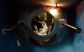 Picture cat, glass, light, pose, paws, device, the window, pilot, time machine, tube, aircraft, bathyscaphe, experiment, ...