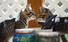 Picture cats, kitty, muzzle, kittens, banks, kitty, kids, a couple, two, bokeh, two kittens