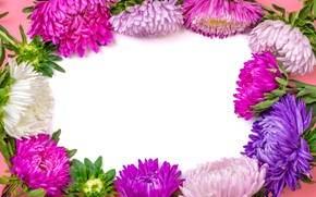 Picture summer, flowers, paper, asters