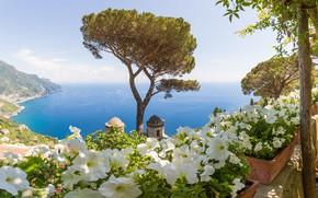 Picture sea, tree, Italy, Amalfi, Petunia, Ravello, Villa Rufolo