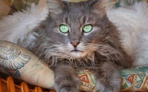Picture cat, cat, look, basket, lies, pillow, grey