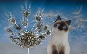 Picture Dandelion, Look, Cat, Eyes, Ears