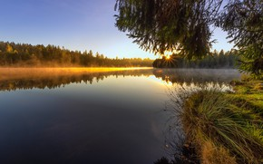 Picture grass, the sun, branches, fog, shore, morning, needles, pond
